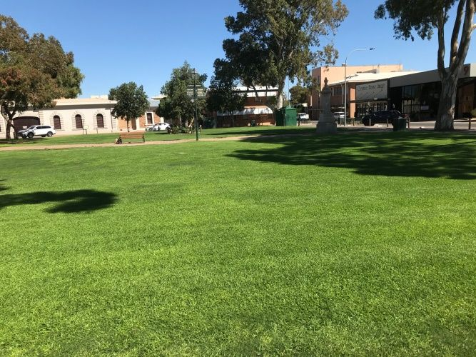 Healthy green grass in Gladstone Square